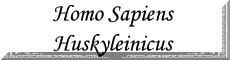 Homo Sapiens Huskyleinicus