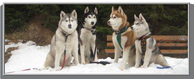unterschiede zwischen wolf und hund